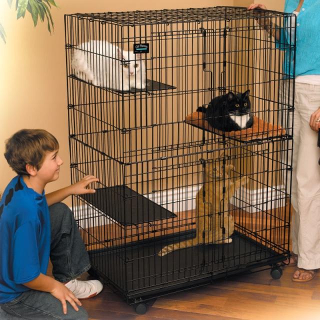 Вышивка поющие коты схема 72